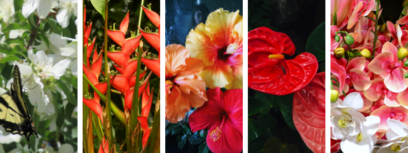 5-caribbean-flowers