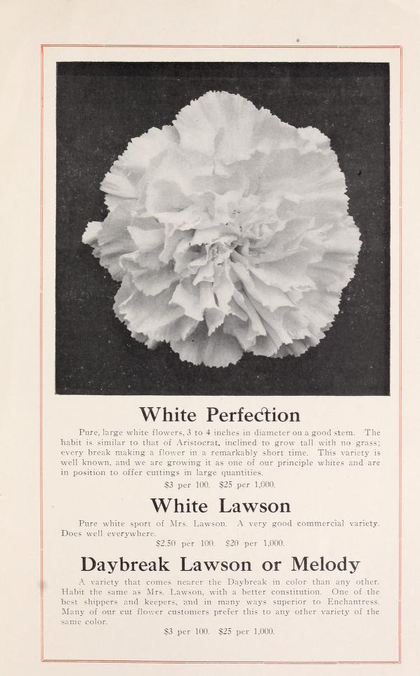 Chicago Carnation Company 1908