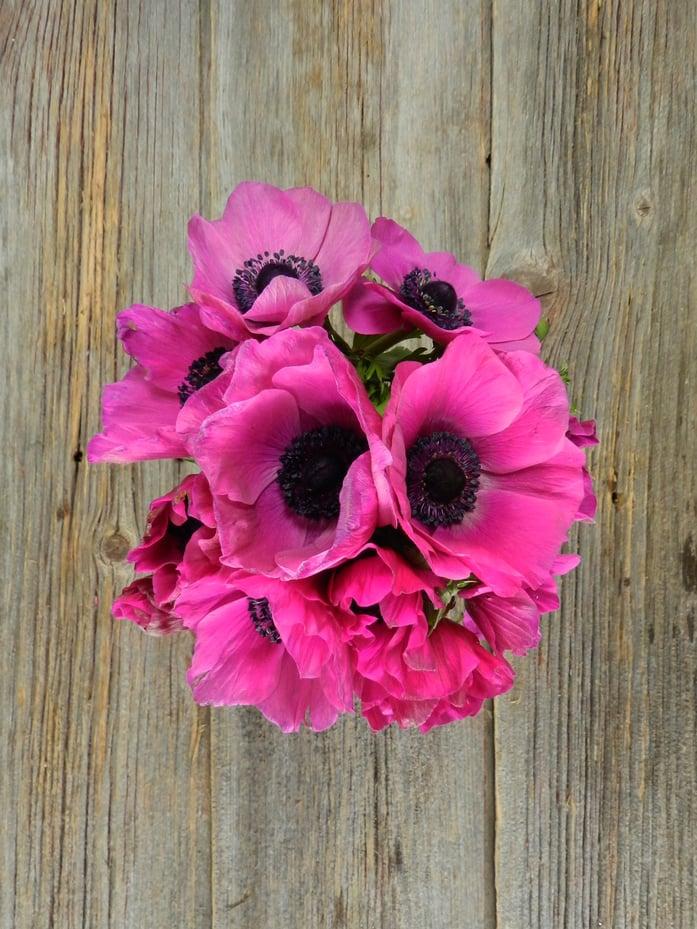Hot Pink Group FlowerFarm
