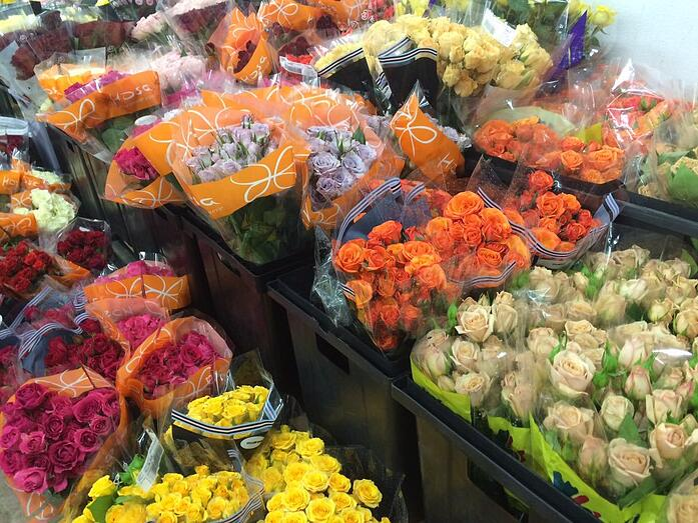 KennicottBros myriad colors flowers.jpg