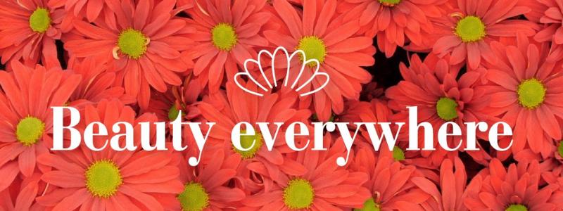 beauty-everywhere-chrysanthemum