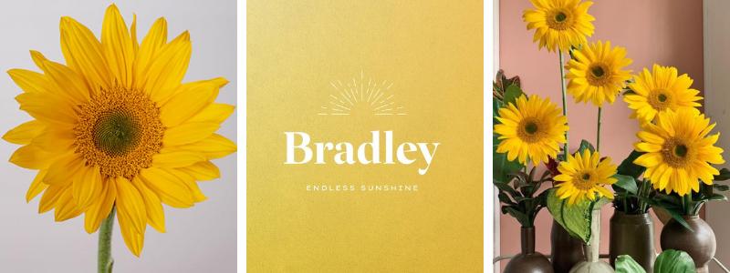 bradley-feature
