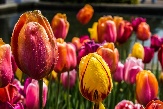 varieties of beautiful flowers