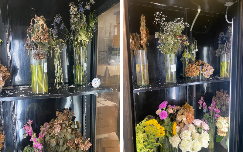 ruined-flowers