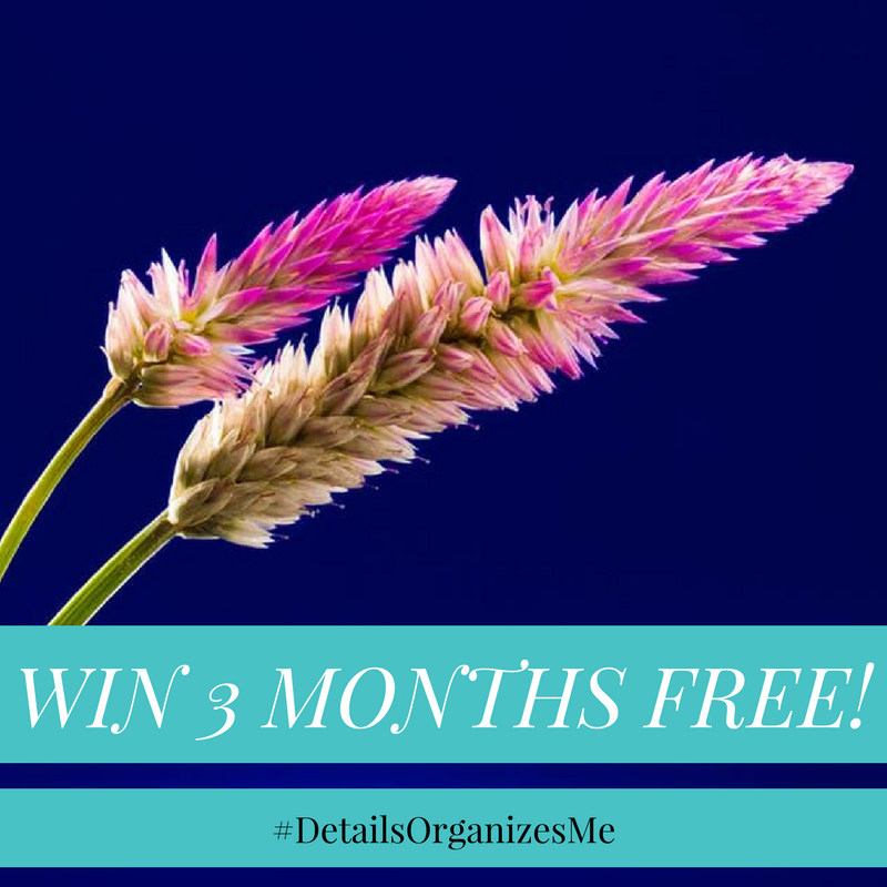 win 3 months free (1).png